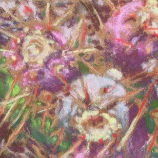 xÉtude pour Fleurs du désert, julie Morin